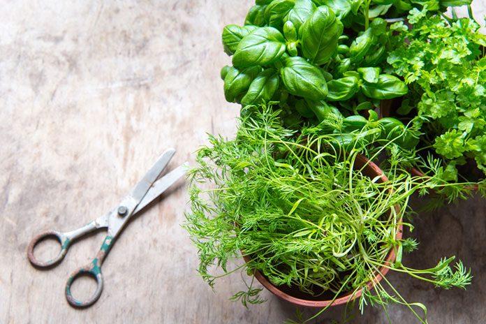 Zimowe zioła w Twoim domu