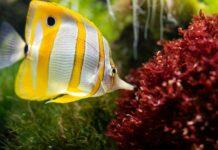 rybki